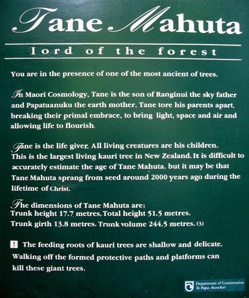Waipoua Forest - Tane Mahuta