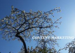 Content Marketing Kirschblüte