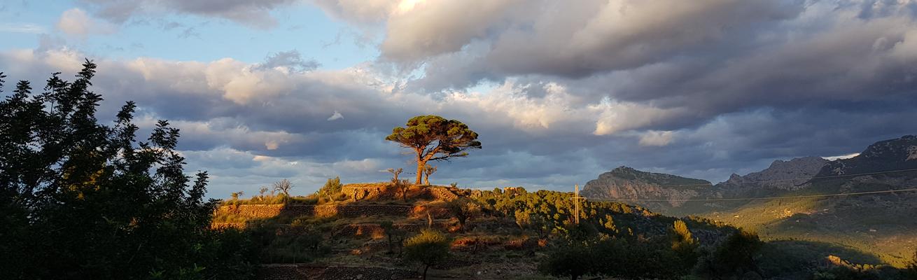 Kauri Spirit Marketer Spanien Mallorca Soller 2019